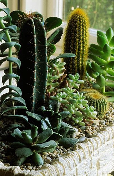 Blog multi vaso como plantar cactos e suculentas for Como plantar cactus