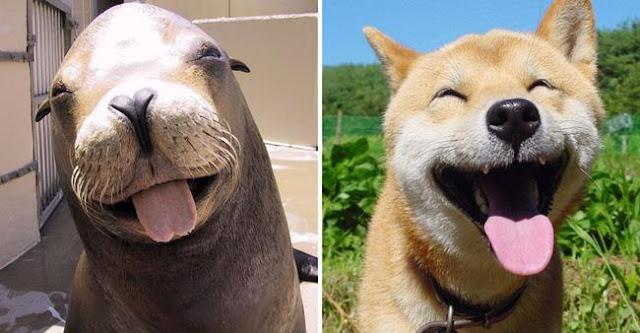 15 minh chứng chó chính là lũ hải cẩu bốn chân trên cạn