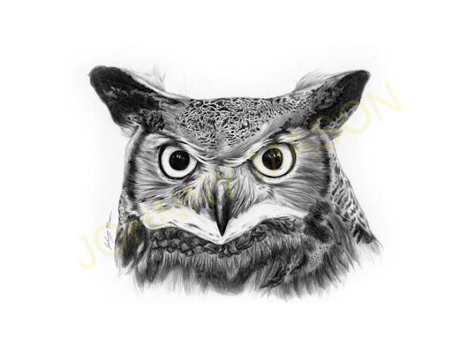 Owl print by Johnny Mason