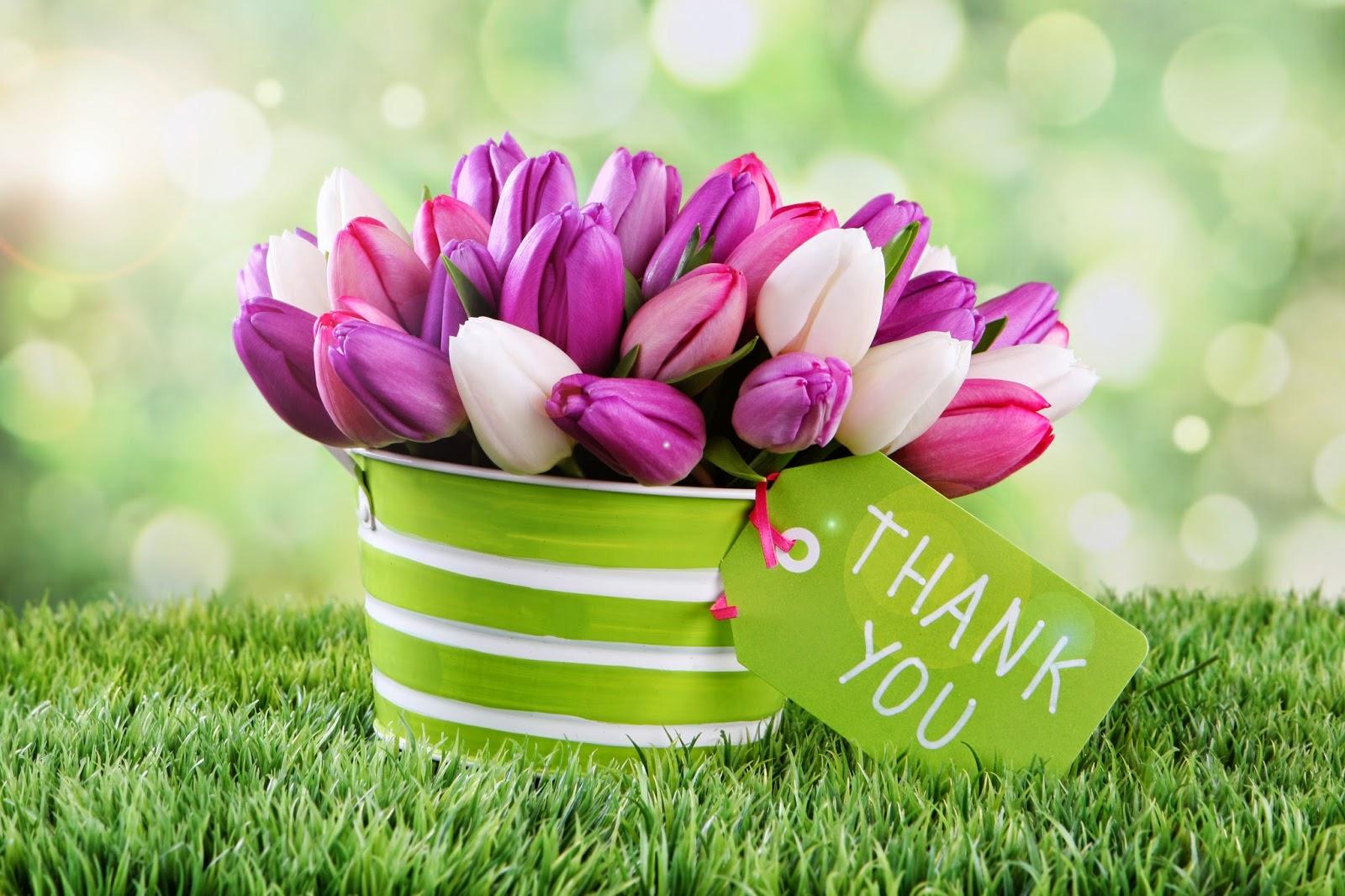 imagenes fotograficas: Imagenes bonitas de flores para ...