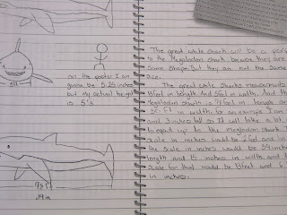 Betta Math: Megalodon Investigation: Work Samples