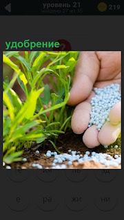 Ладонью посыпается удобрение под растение зеленого цвета