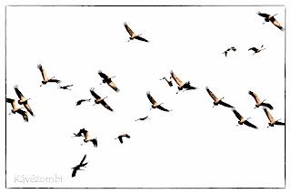 Darucsapat össze vissza repül fehér háttér előtt