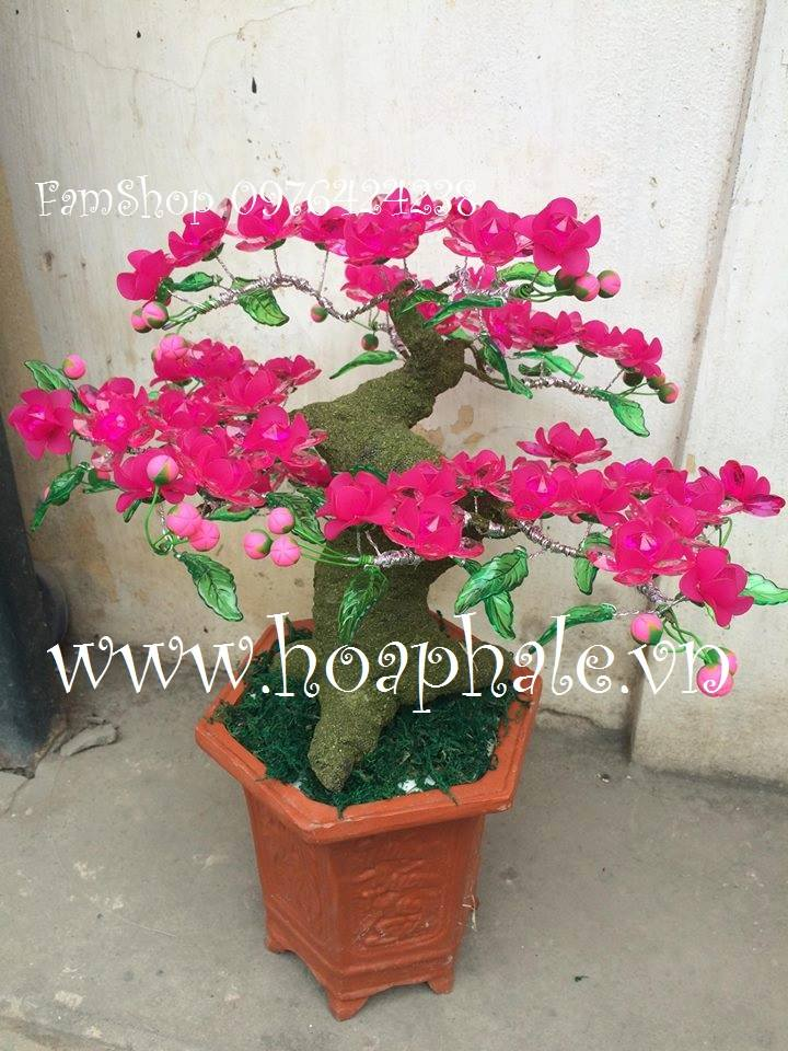 Goc bonsai mai dao cay hoa dao o Yen Bai