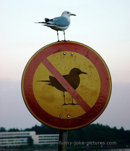 Funny No Seagull Sign Photo Fail