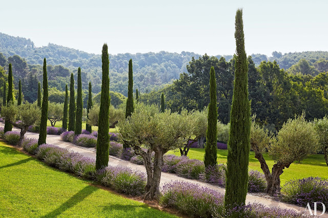 South Of France Home : The entrance drive is lined with olive trees, lavender, and Provençal cypress, a symbol of welcome.