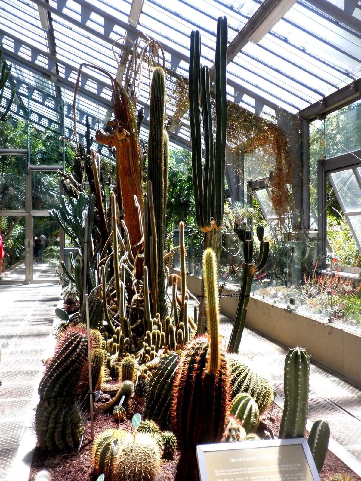 Cactus en el jardín Botánico de Madrid