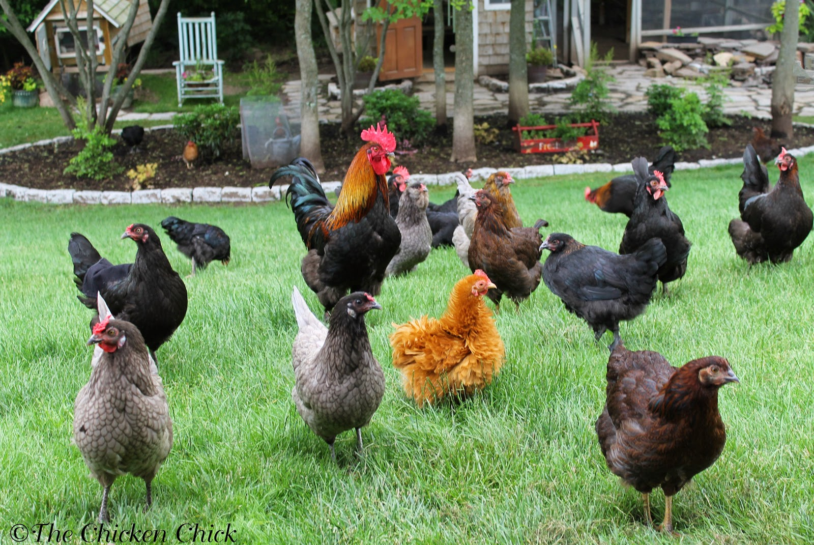 Depopulate: That's the sanitized term for euthanizing the entire flock, cleaning the area and starting clean with a new flock. It's not realistic for most backyard flocks kept as pets.