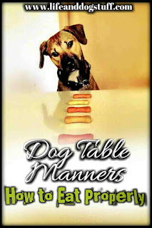 Dog Table Manners - How to Eat Properly