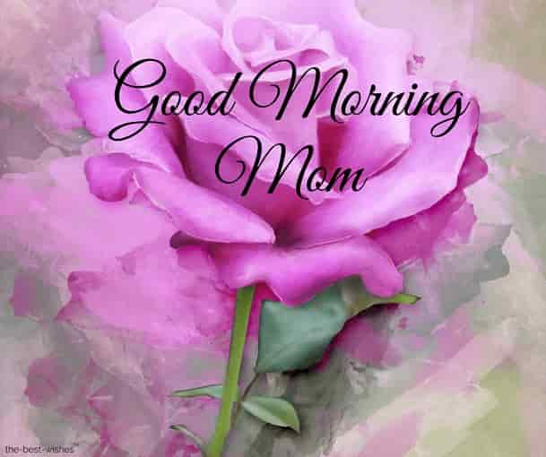 good morning mom with pink rose