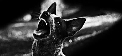 Dramatic lighting dog showing teeth