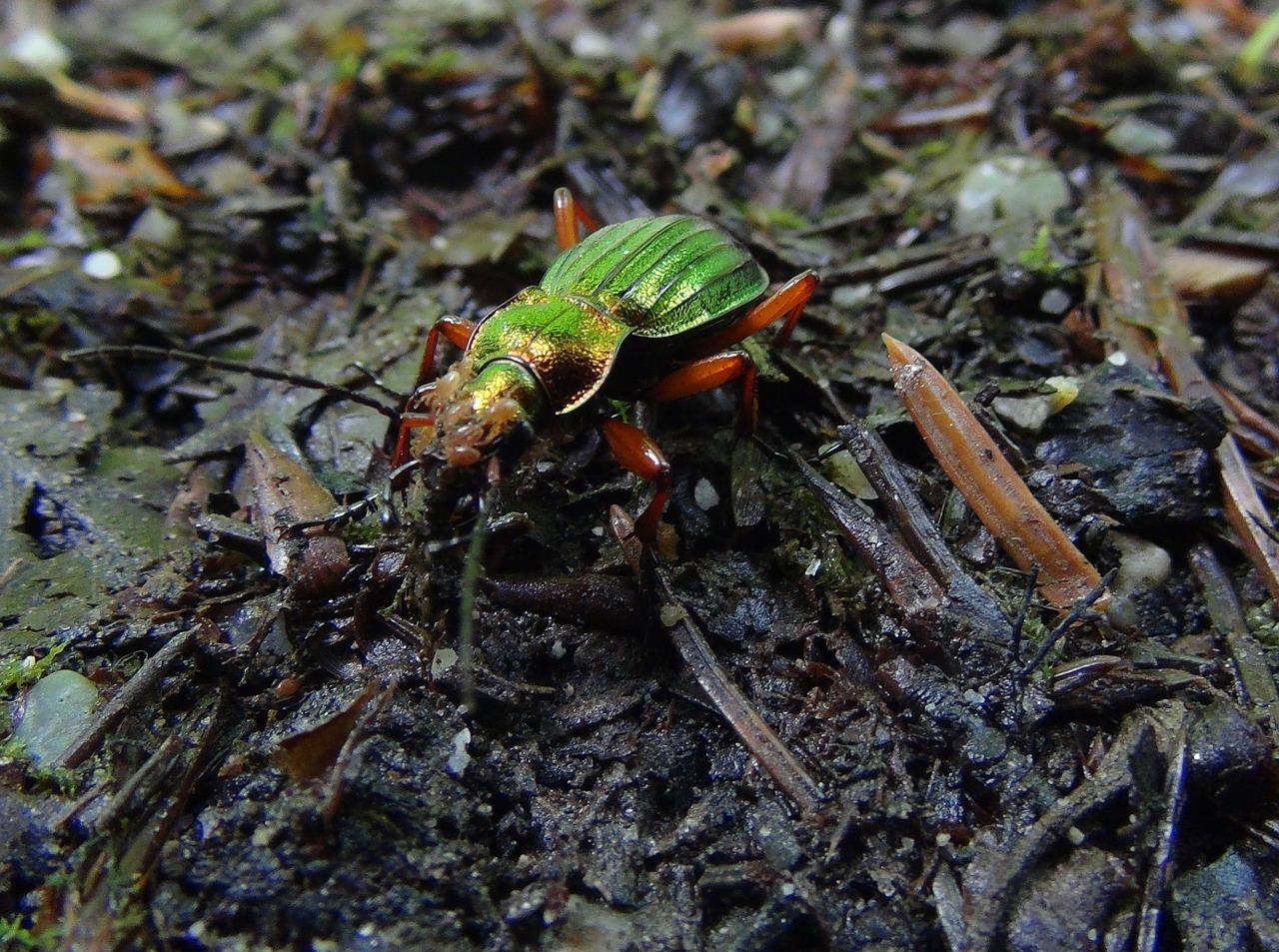 C mo atraer insectos beneficiosos al huerto o jard n for Insectos del jardin