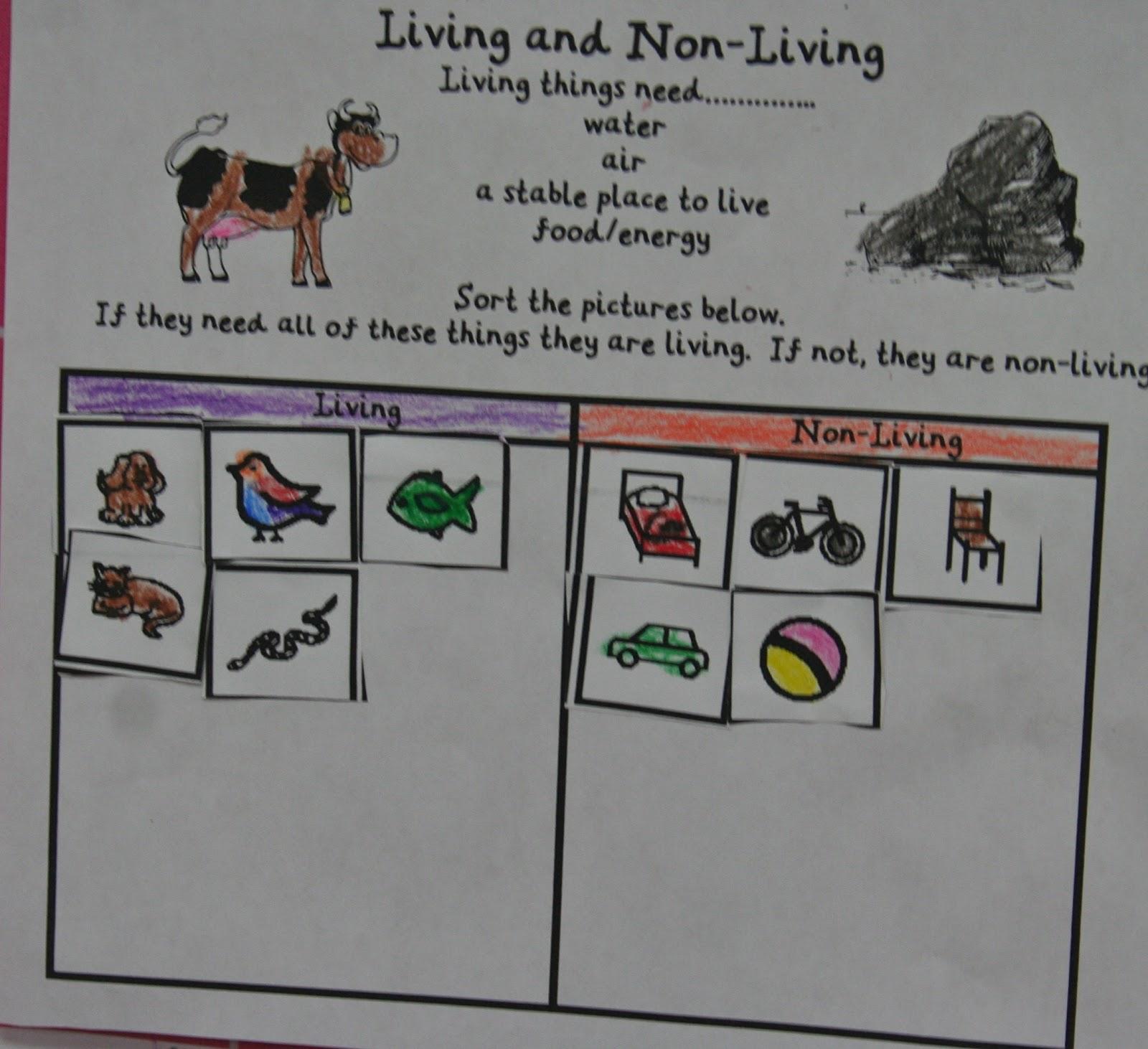 Mrs Lisa S Pre K Crew Rocks Animals Animals Everywhere