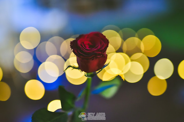 rose with bokeh lights at Glasshouse at Seputeh