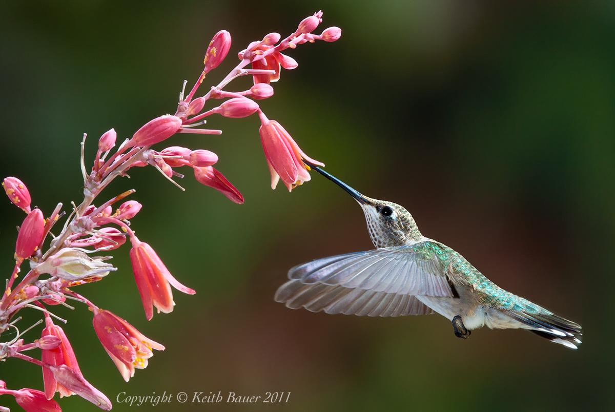 bird feeder birds identification