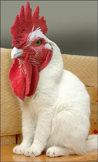 Download 4200 Koleksi Poto Gambar Ayam Lucu Terlucu