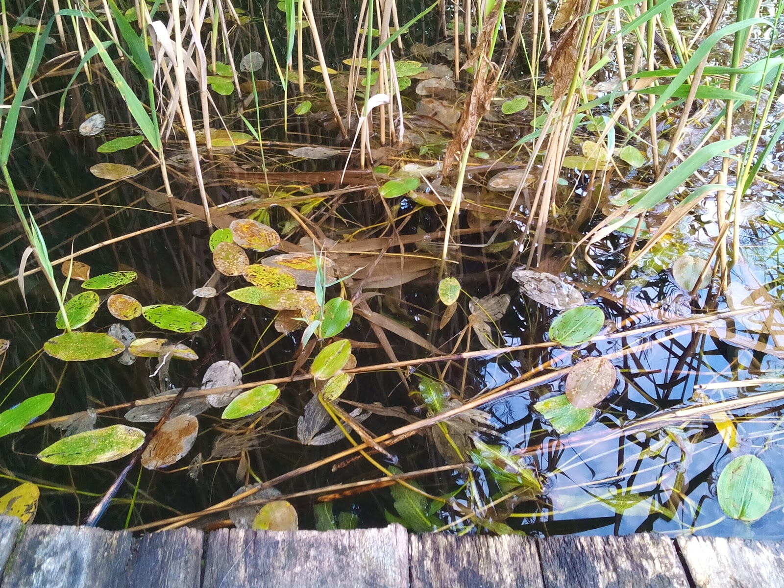 растительность озера