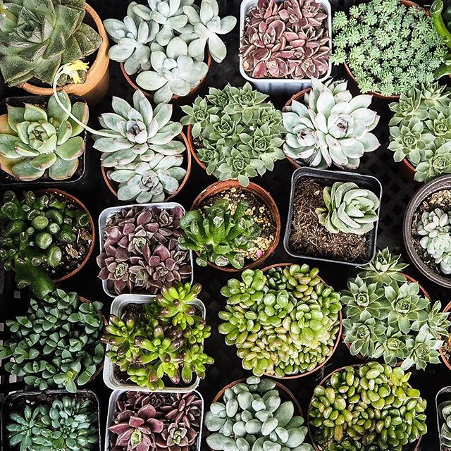 Selection of succulent plants