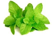 daun mint dapat membuat kulit menjadi halus