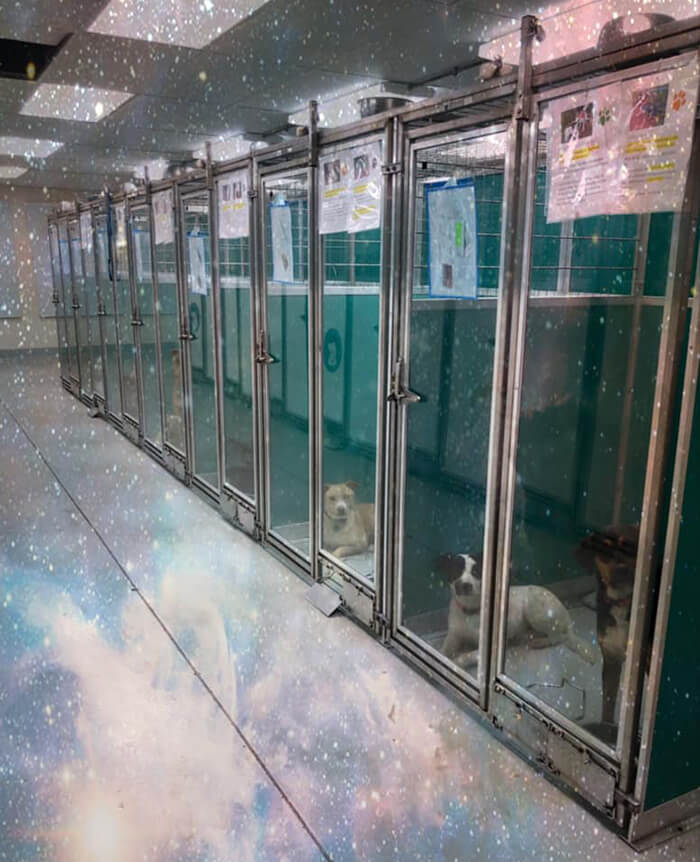 Animal Shelter In Oklahoma City Asks Visitors To Raid Them Instead Of Area 51