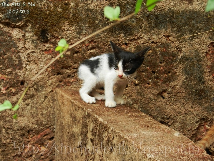 A kitten posing for photoshoot!