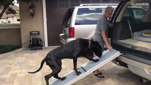 A smart dog teaches the puppy to use the ramp