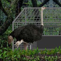 Play Games2Rule Wild Ostrich Escape