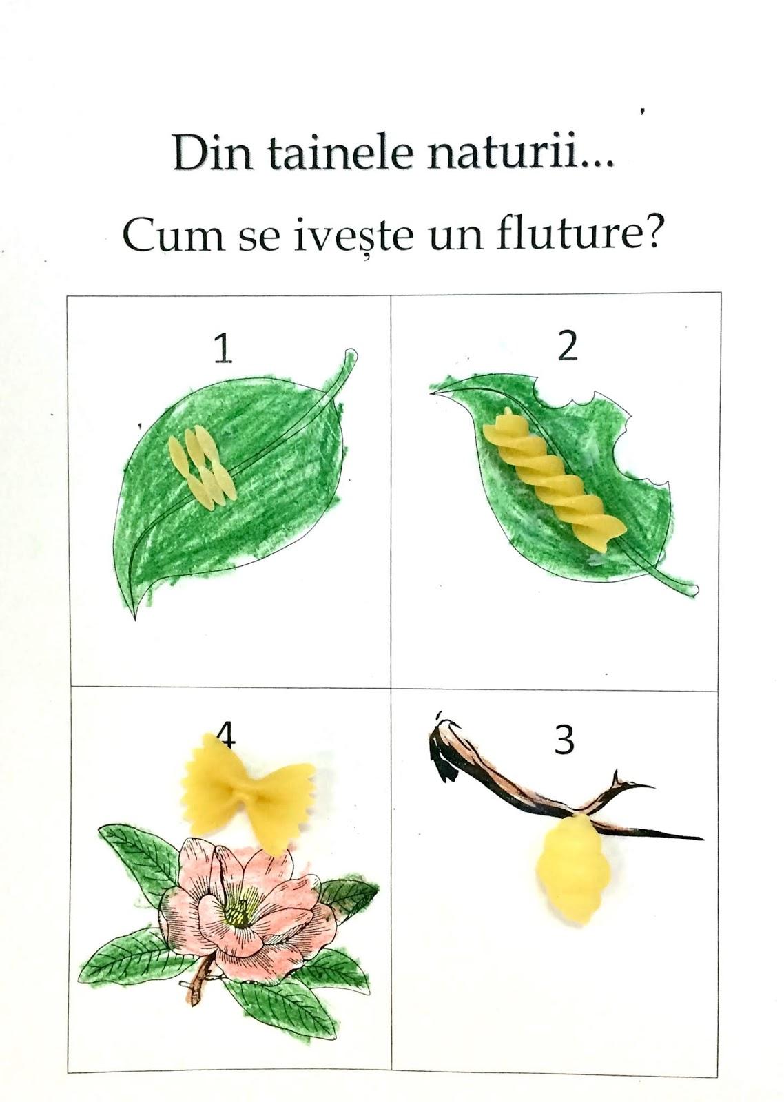 Cum explici metamorfoza fluturelui folosind paste făinoase de forme potrivite