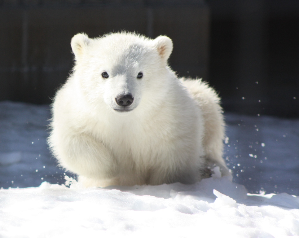 Each Day An Adventure In Alaska: Our Baby Polar Bear