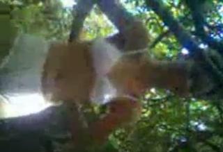 anak SMA jilbab ngentot di hutan.mp4