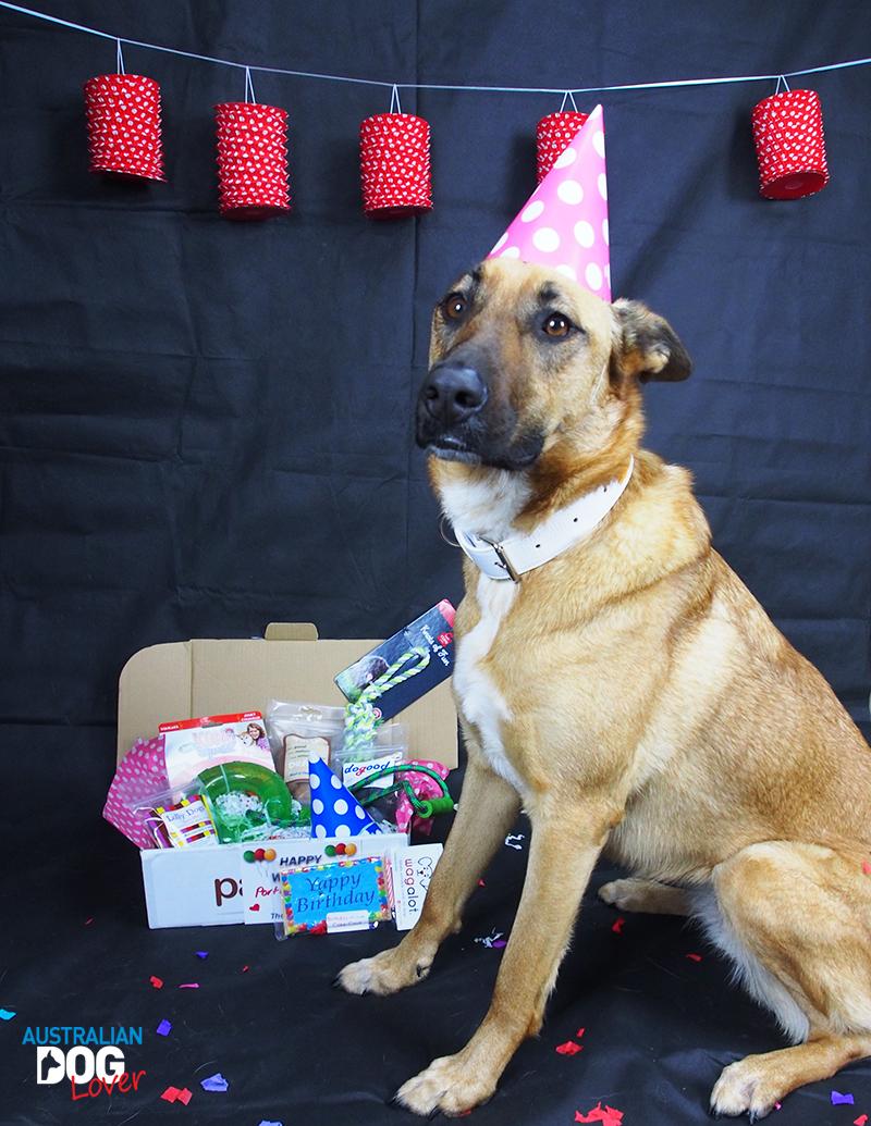 Pawgie Birthday Gift Box For Dogs Australian Dog Lover