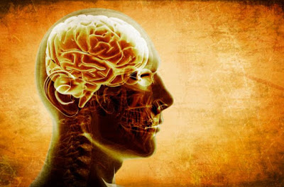 The current leading hypothesis for Alzheimer's is that plaques and tau proteins cause Alzheimer's disease.