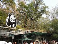 Giant Panda - Beijing Zoo
