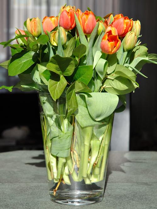 Dreamstuff Laatste tulpen  Last tulips
