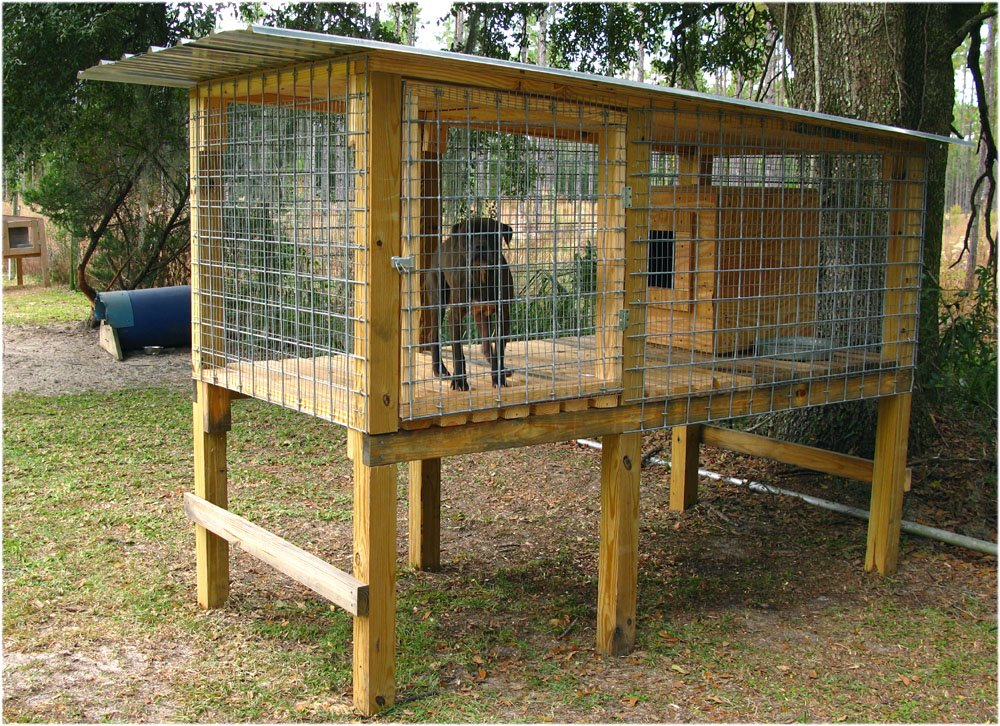 Building A Dog Kennel And Run Home Improvement