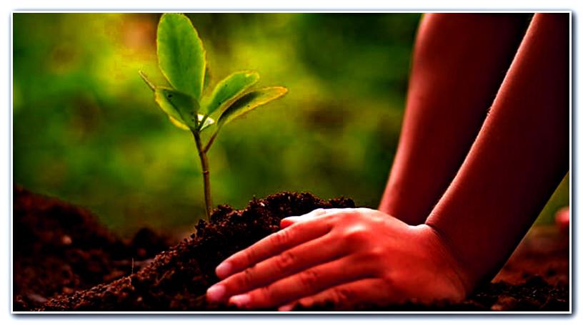 تنظيم ورشة تكوينية لتعزيز قدرات الصحفيين في مجال البيئة والتنمية المستدامة