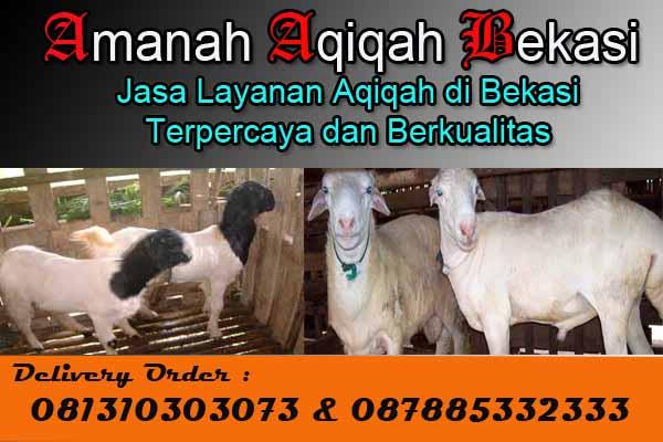 Harga_Kambing_Aqiqah_Bekasi