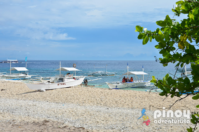 Balicasag Island Hopping Tours in Bohol