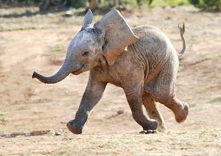 Anak Gajah Yang Mendapat Jutaan View, Instagram