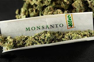 Monsanto_Camnnabis_ConjugandoAdjetivos