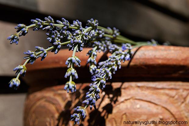 как засушить травы на зиму | Блог Naturally в глуши