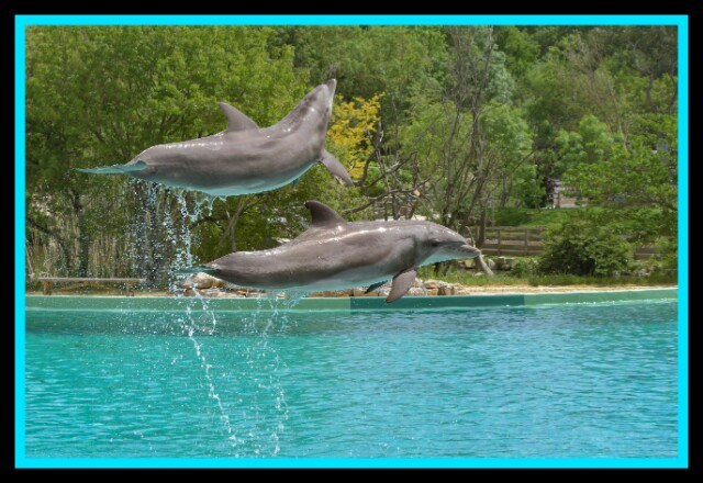 Dolphin, Jump, Two, Water,River