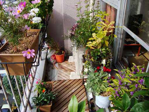 Small backyard balcony; small backyard designs; small backyard ideas; vertical garden; bakcyard balcony plants; balcony plants full sun; balcony gardening; balcony flowers; balcony landscaping; terrace plants; balcony gardening ideas; balcony gardening designs; backyard balcony gardening; backyard balcony flowers; backyard balcony landscaping; backyard landscaping; backyard landscaping ideas; backyard designs ideas; backyard home decor; exterior home decoarting ideas; balcony decoarting ideas; exterior home decor; exterior home ideas
