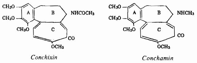 Thành phần hóa học Tỏi Độc - Colchicum autumnale - Nguyên liệu làm thốc Có Chất Độc