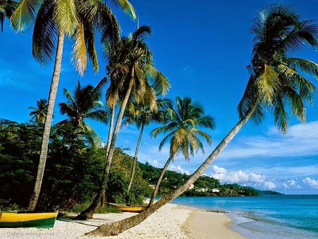 Gambar Pemandangan Alam Terindah di Dunia Pantai Paling Cantik Pohon Kelapa