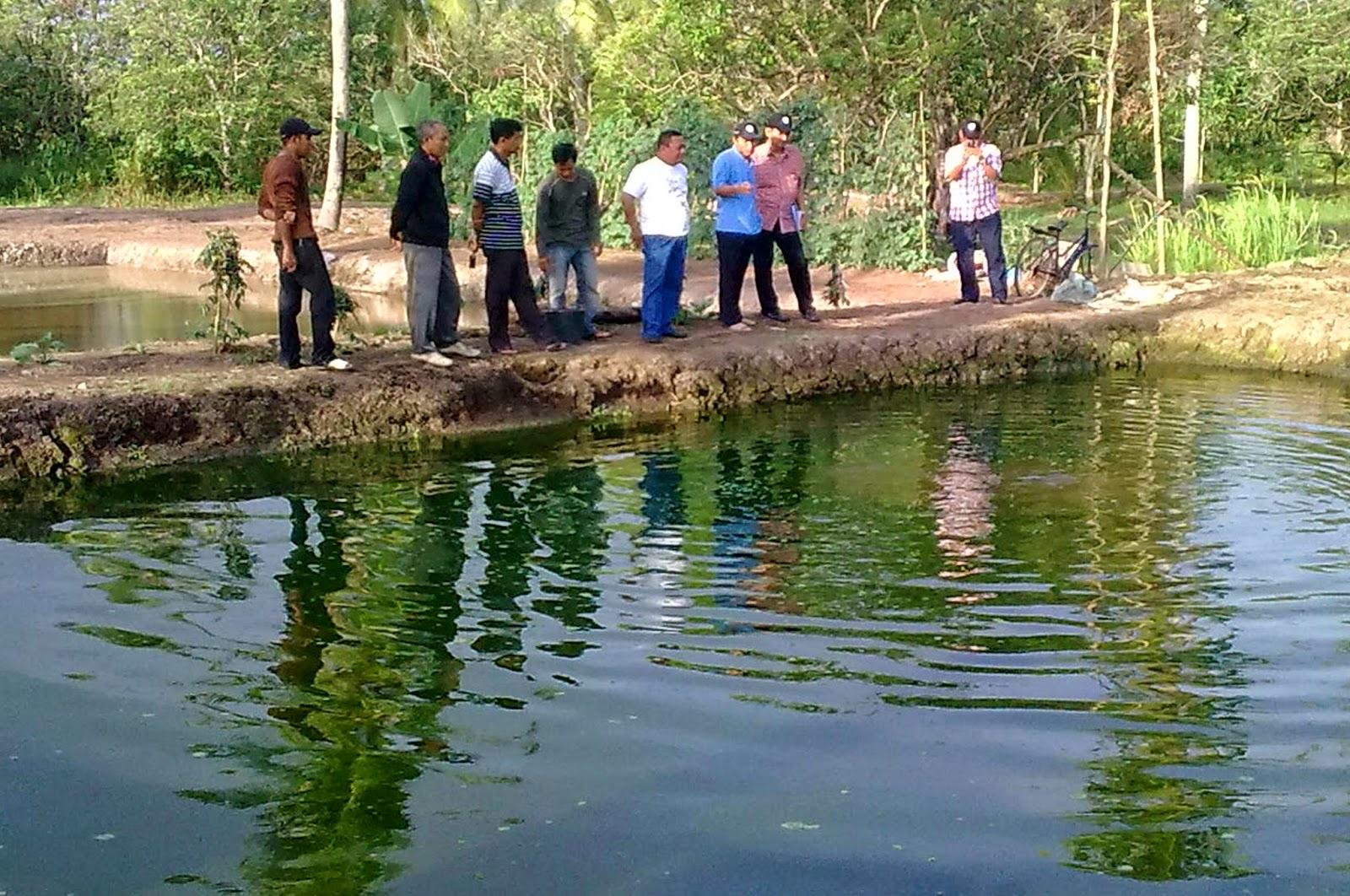 Prospek Budidaya Ikan Patin