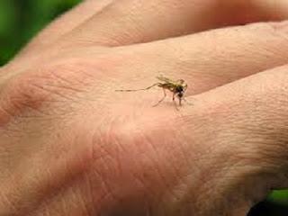 cara-praktis-menghindari-gigitan-nyamuk-secara-alami