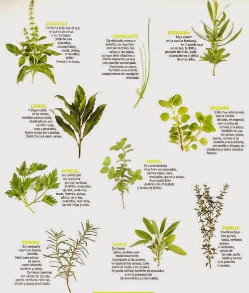 Recetas cocina naturista hierbas arom ticas y condimentos for Tipos de hierbas medicinales