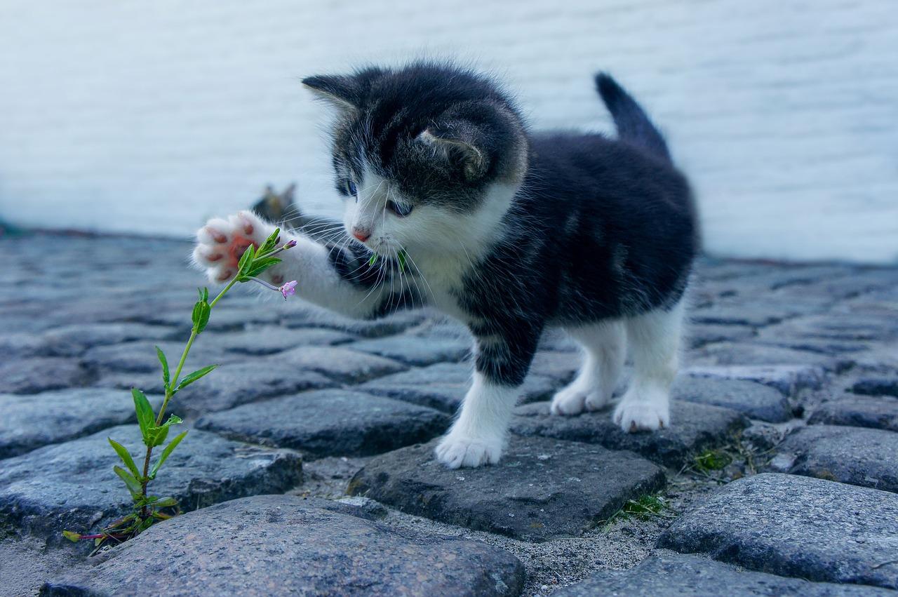 kucing bermain dengan pokok bunga