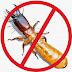 Cara Mencegah dan Memberantas Rayap Secara Efektif